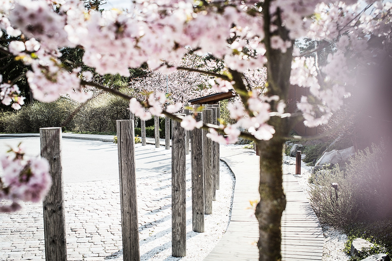 Yasuragi – Upplev det japanska badet